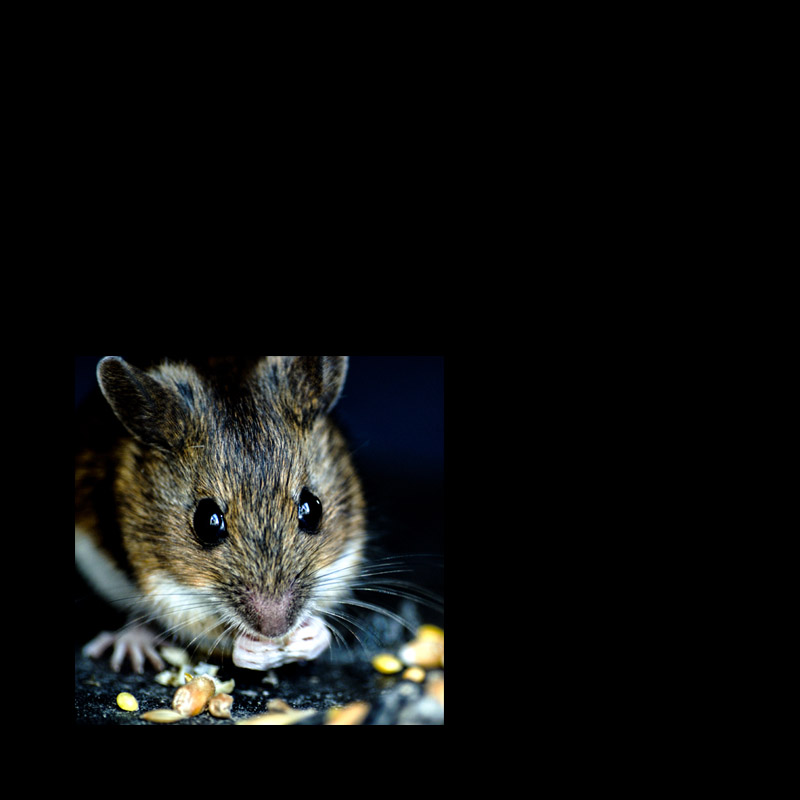 How can I get rid of a mouse in my motorhome?