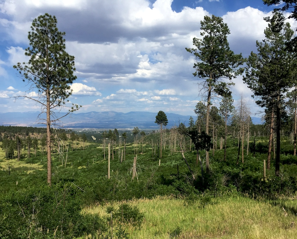 American Spring road offers free camping near Los Alamos