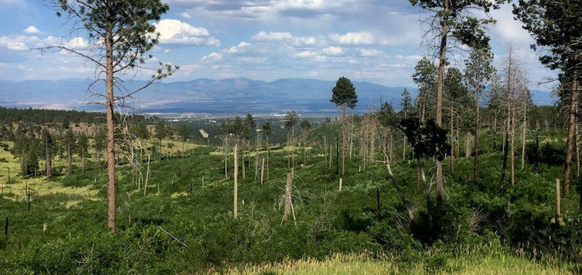 American Spring – Free camping near Los Alamos